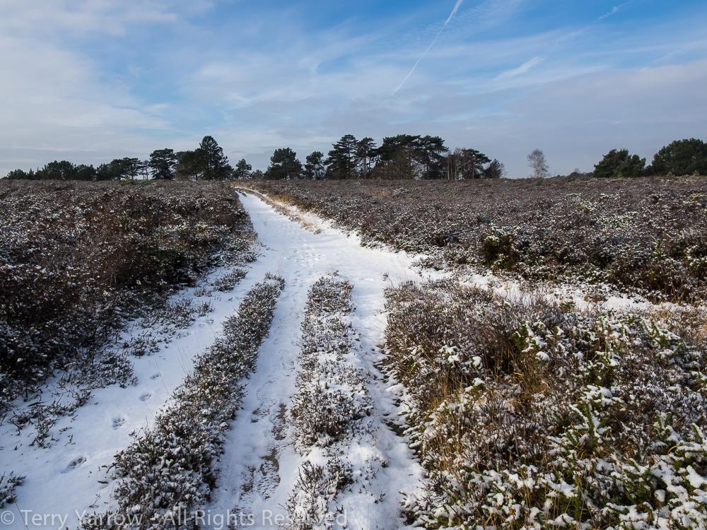 On the Open Heath