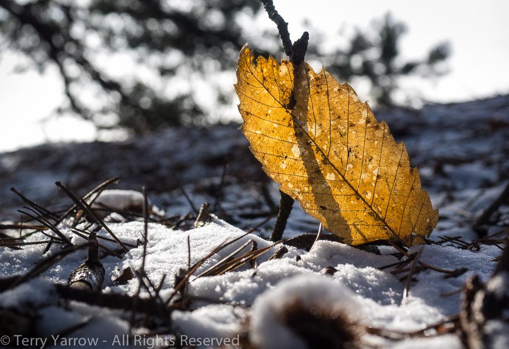 A Last Vestige of Autumn