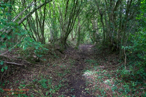 The sunken lane near Chetnole