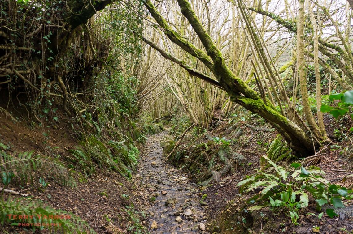 A Sunken Lane