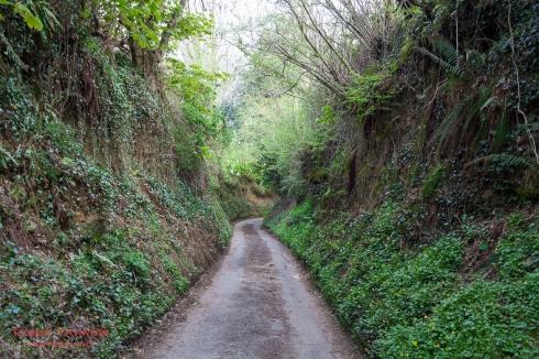 Near Stoke Abbot