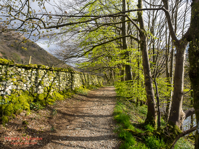 Walking through Borrowdale