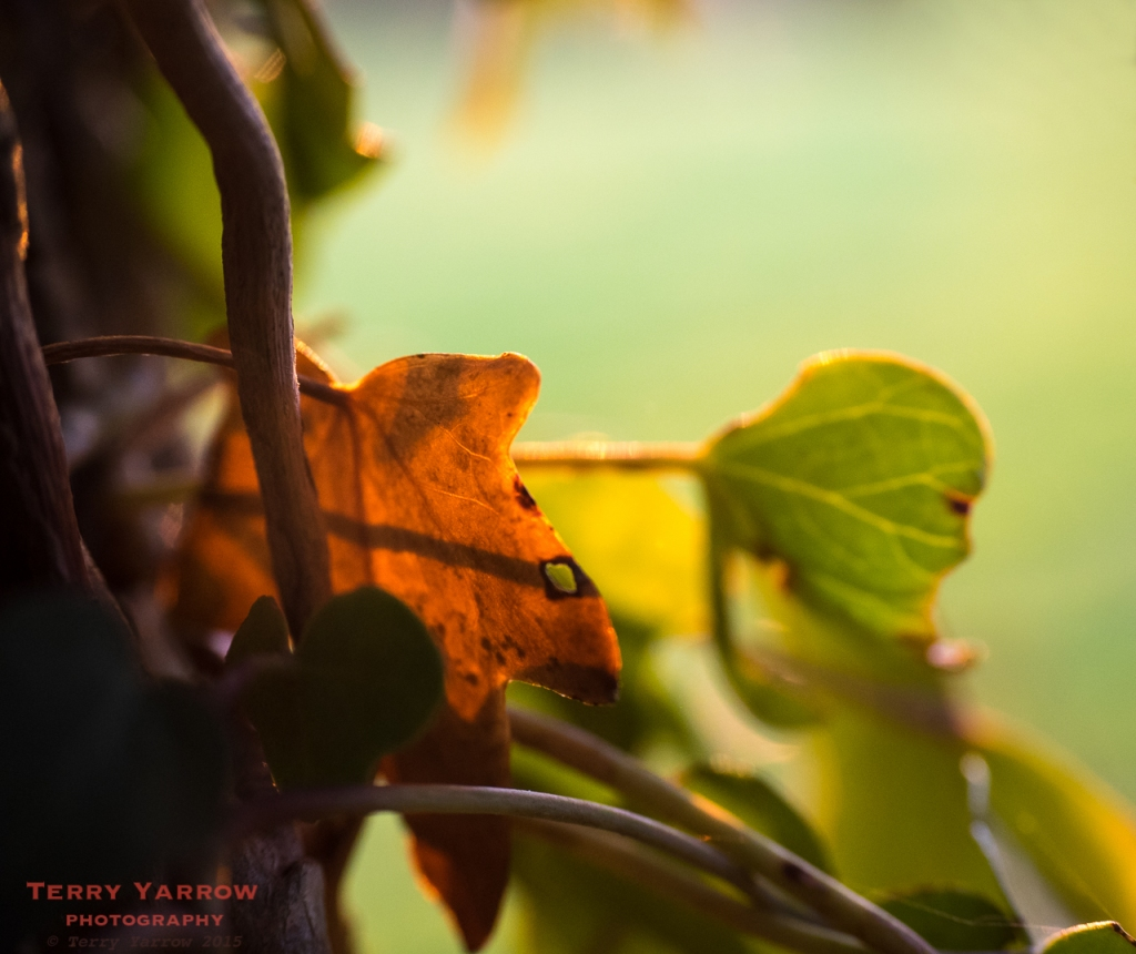Vestige of Autumn