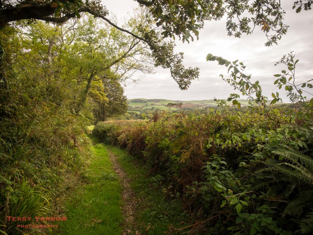 Venn Lane