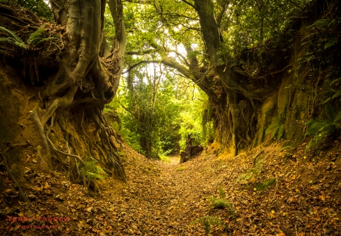 The Magical, Mystery of Dorset's Holloways