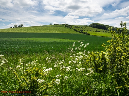 The Lush Green Hills