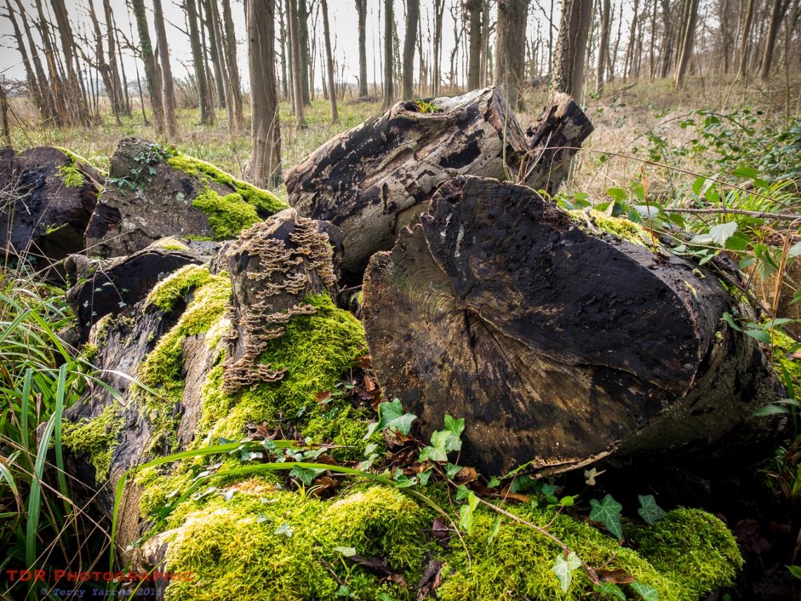 The Log Pile