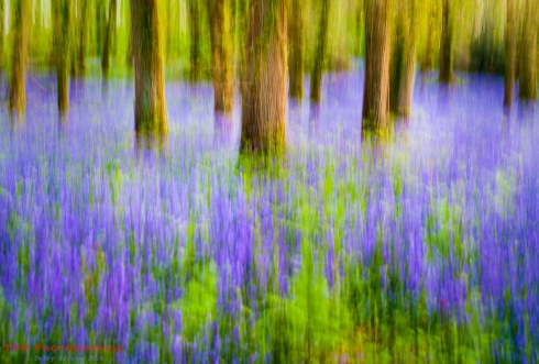 Impression - Bluebell Woods