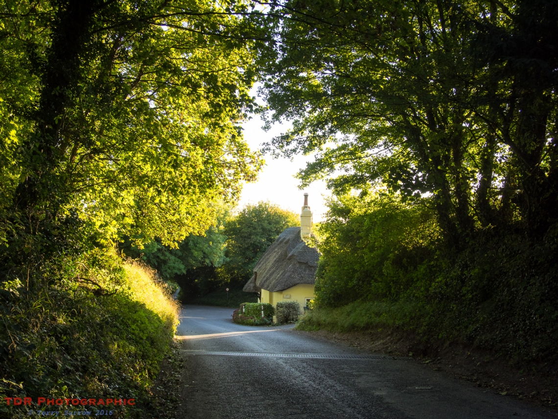 Down a Country Lane