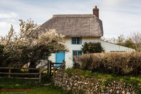 A Dorset Cottage