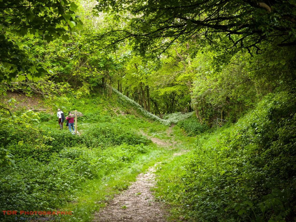 The Dorset Gap