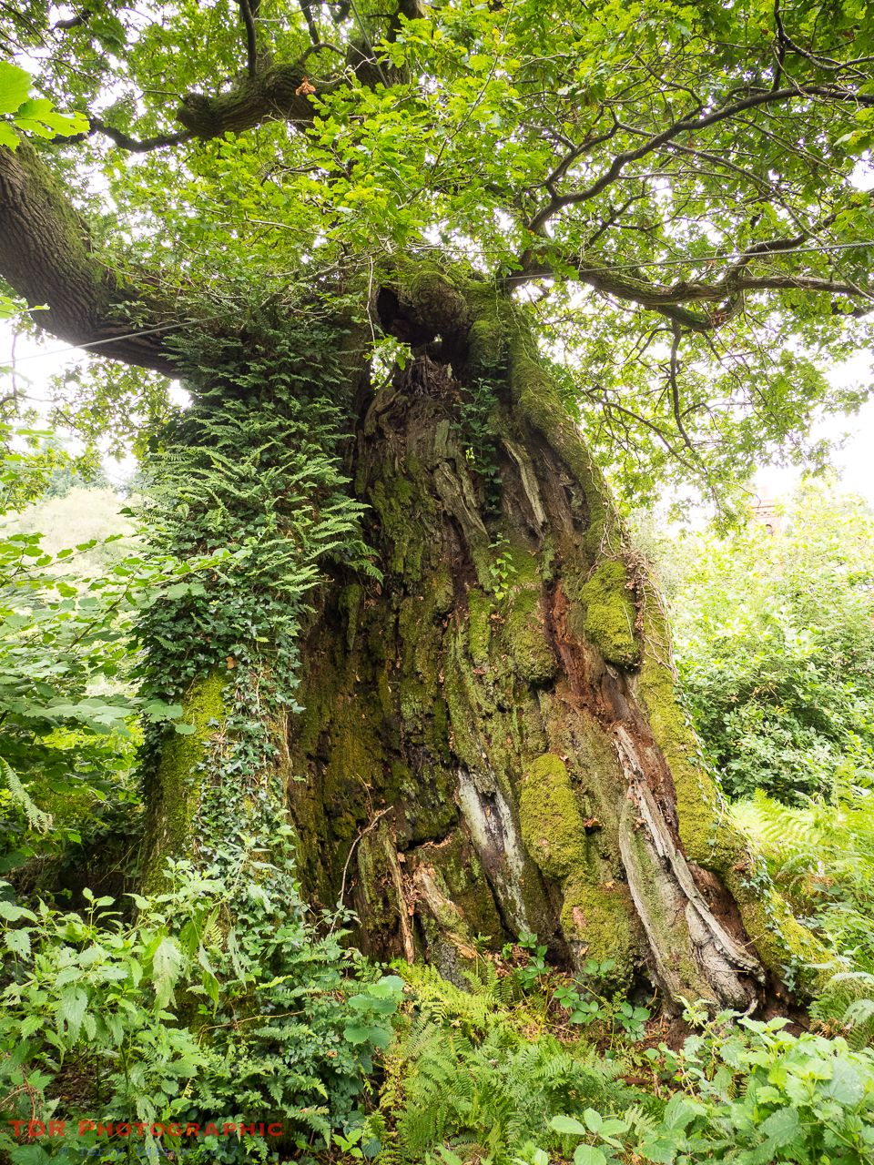 Remedy Oak