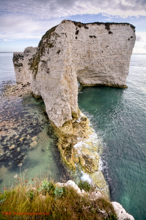 old Harry - up close and personal!