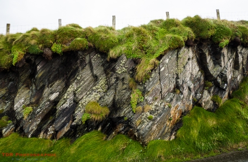 Posts, Rock and Grass