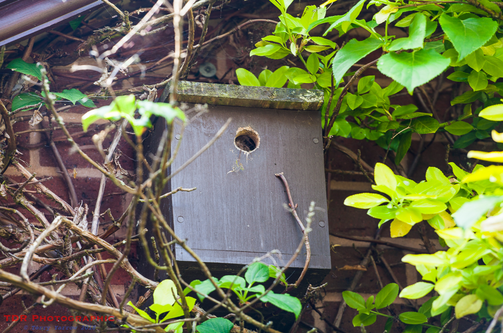 Tree Bumblebee Nest