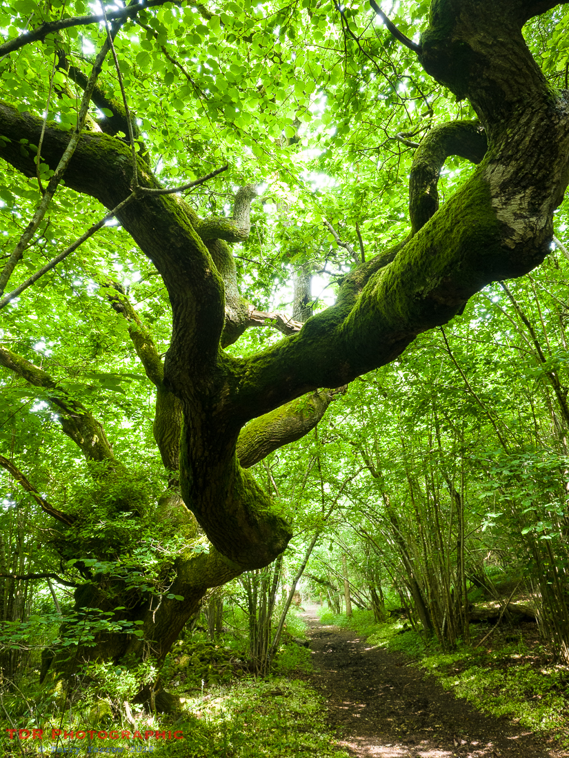 In the Ancient Woodlands