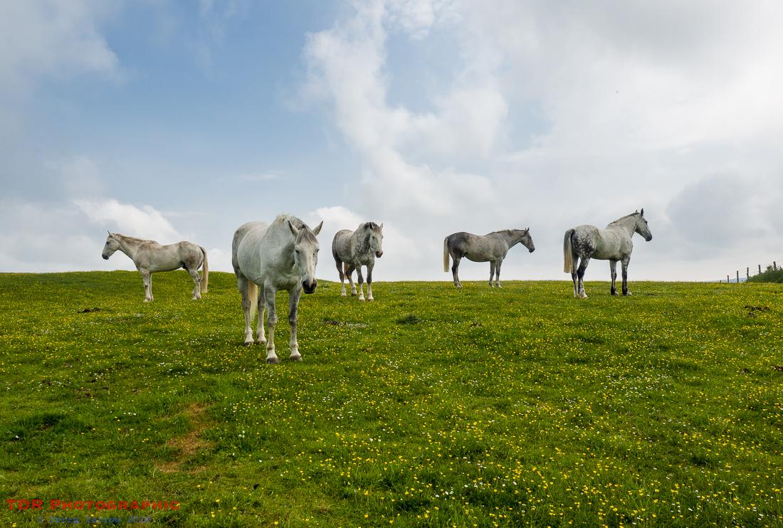 Hilltop Horses