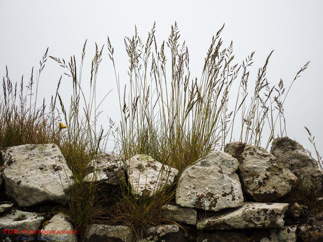 Grass 'n' Rocks