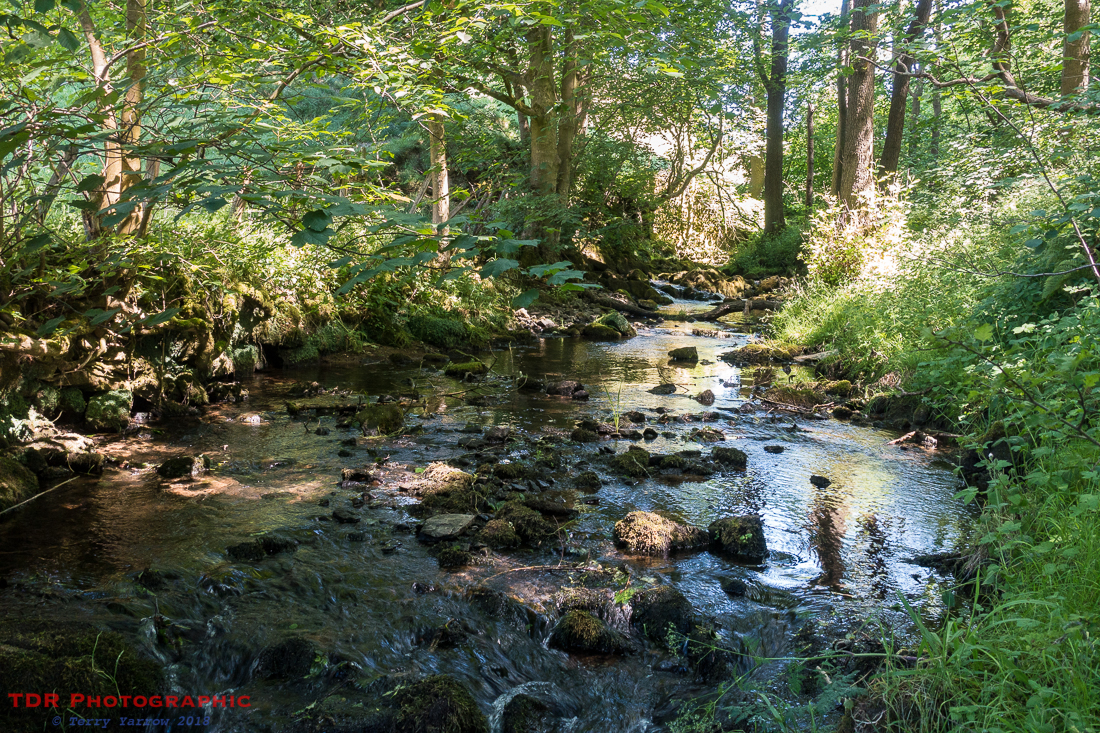 Flasby Beck