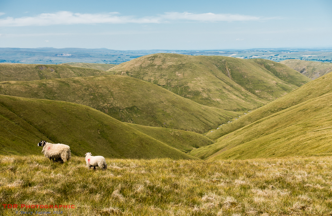 On the Howgill Fells