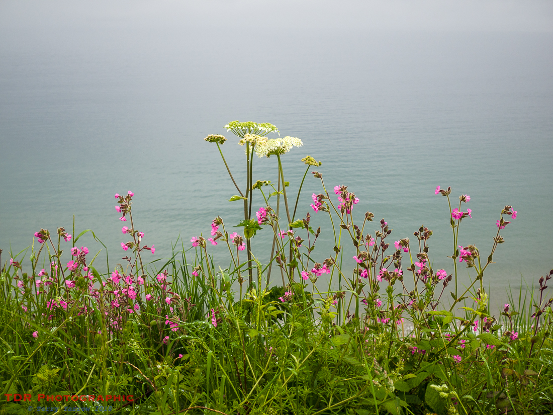 Wild Flowers on the Coast