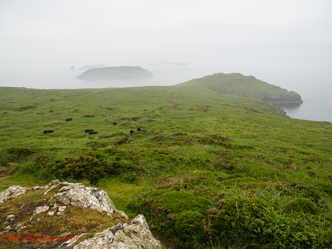 Skomer in the Mist