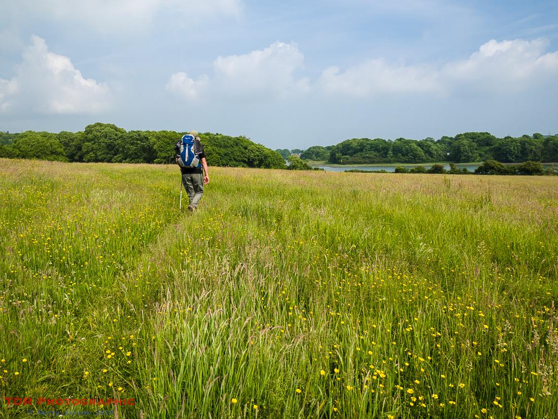Walking across the meadows, Pembroke