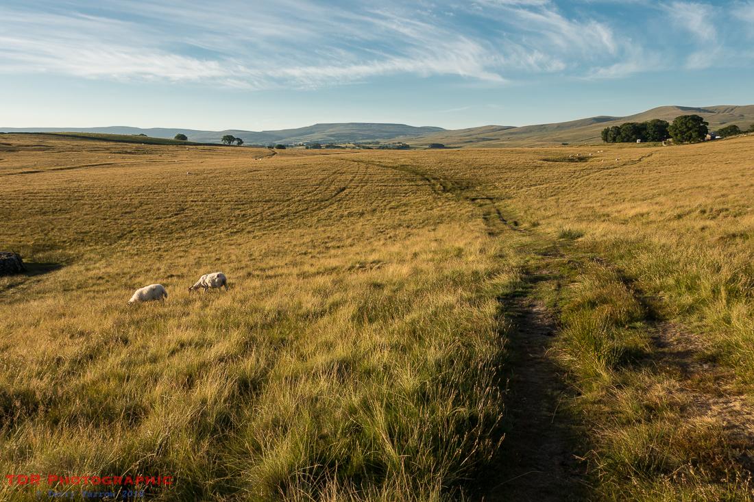 On Ravenstonedale Moor