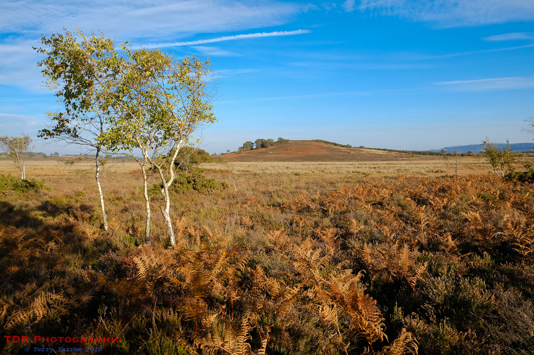 On a Dorset Heath