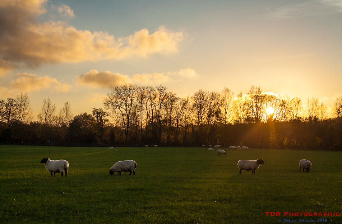 Sunset in the Pastures