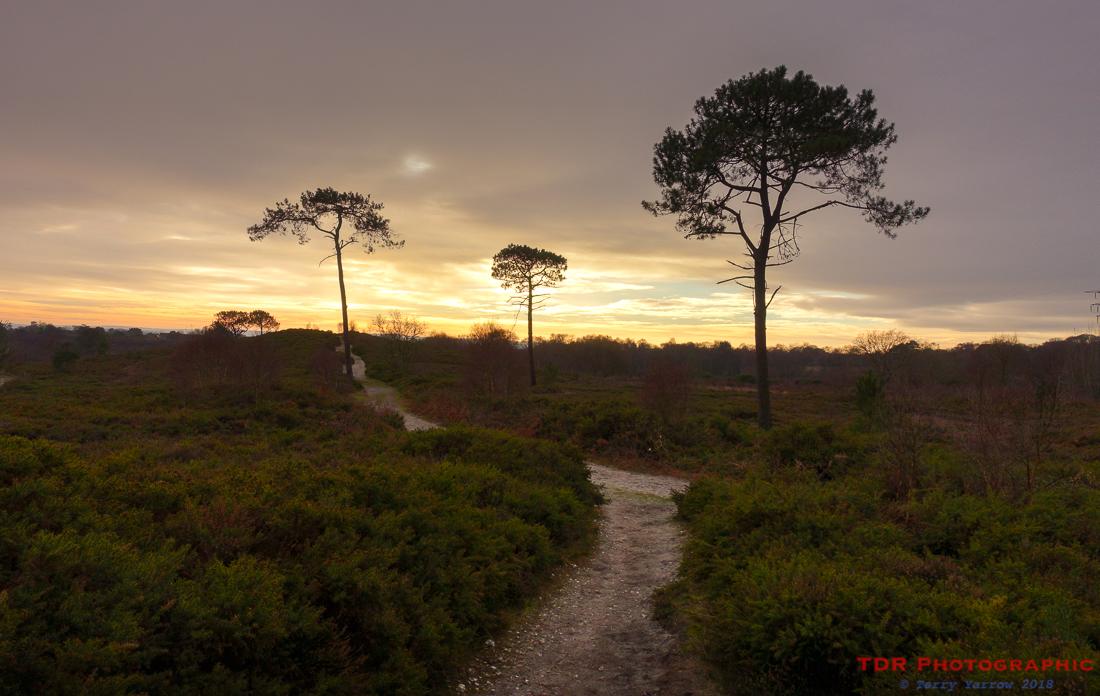 Evening on the Heath