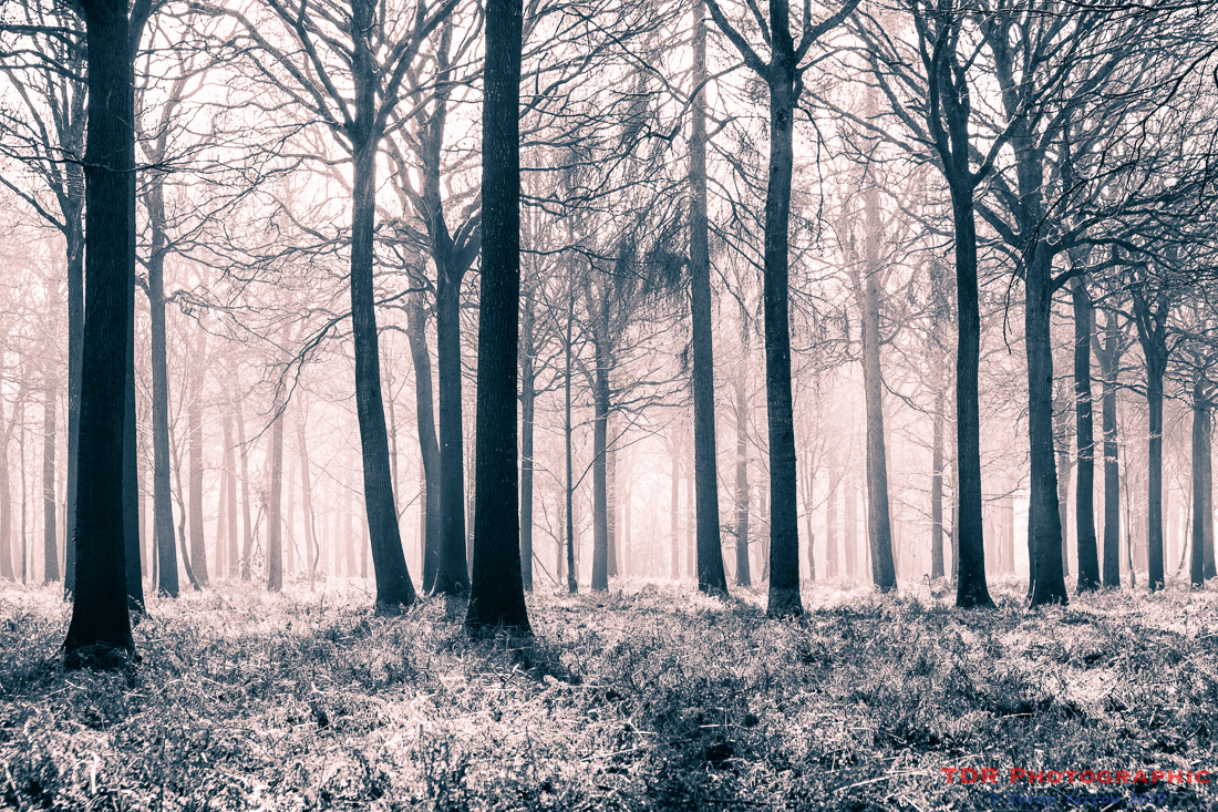 In the Misty Woods