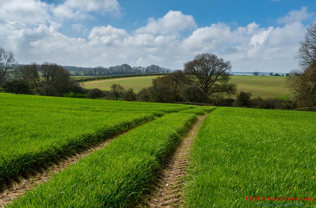 The Rolling Dorset Landscape