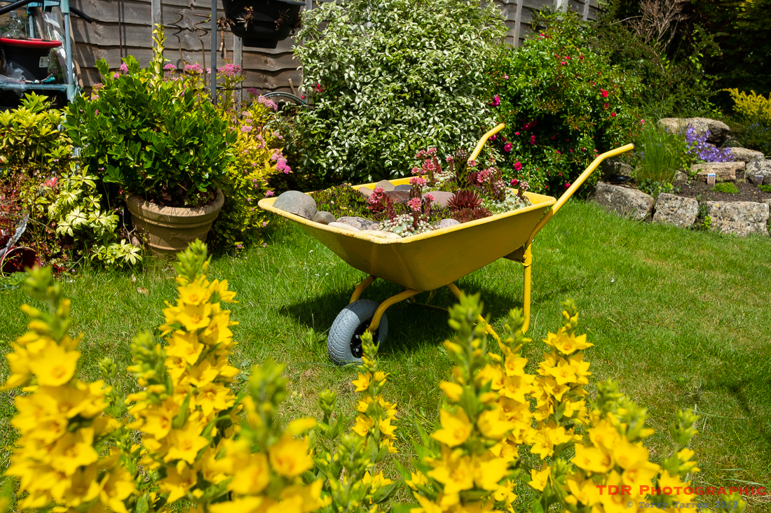 The Yellow Wheelbarrow