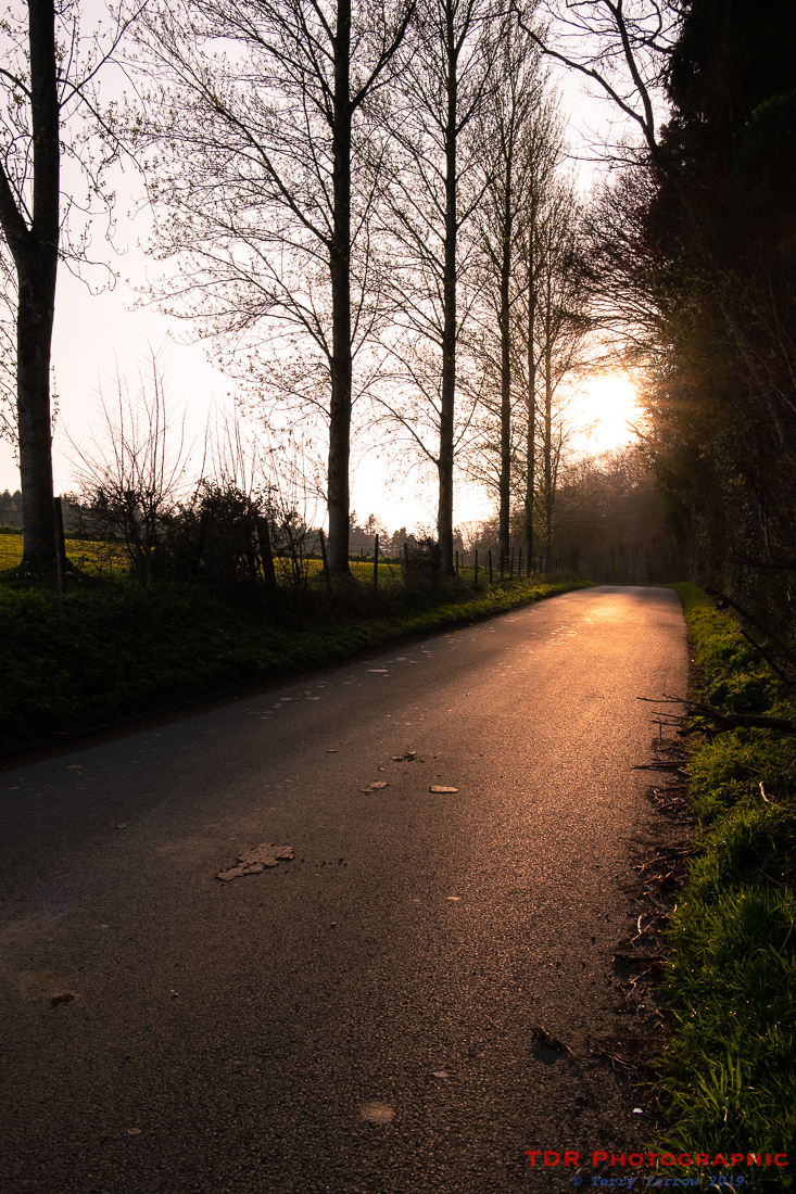 The Country Lane at Sunset