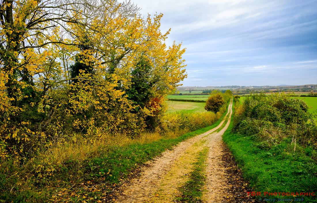 A Walk in Autumn