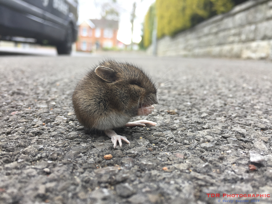 Little Creature on a Big Street